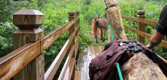 Smoky Mountain Llama Treks - Day Tours: bridge