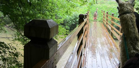 Smoky Mountain Llama Treks - Day Tours: Smaller Bridge