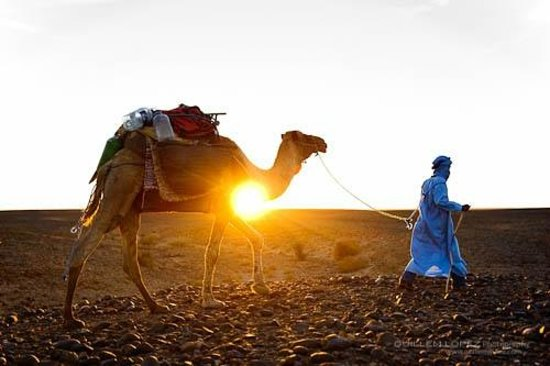 Morocco Excursions: Sunset camel tour
