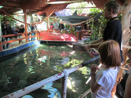 Marineland Crocodile Park