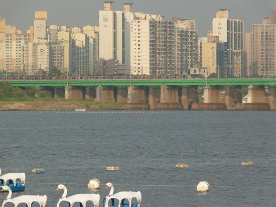 Hangang Park: Swan Boats