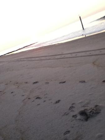 Long Beach Island, NJ : walk on the beach