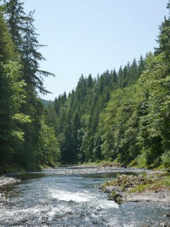 Tillamook Forest Center: Great hiking right along the river