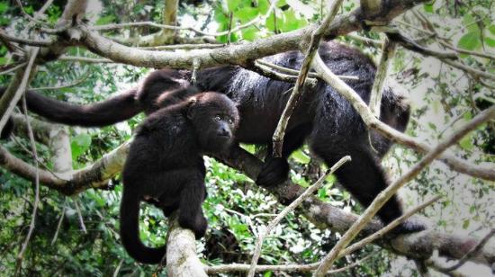Maruba Resort Jungle Spa: Baboon sancutary, courtesy of Maruba!