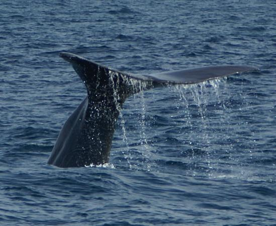 Austin Heights Scenic Bed & Breakfast: Whale Watching Kaikoura