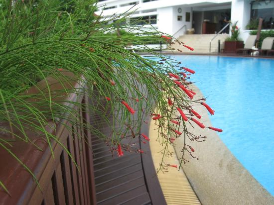 Centre Point Hotel Silom: Pool detail 01