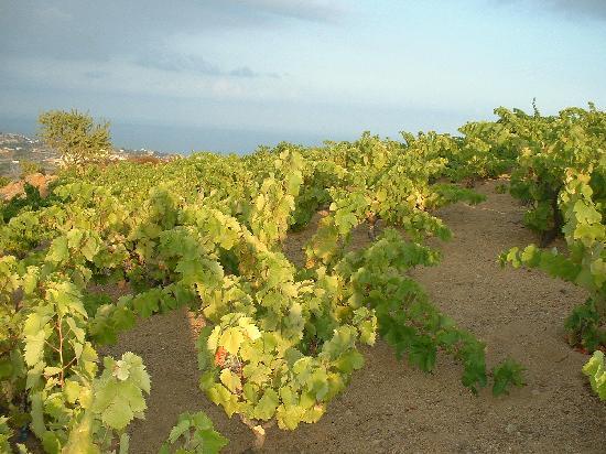 The Wine Colours: getlstd_property_photo