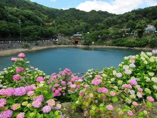 Gamagori, Japonya: 大きな池がありました