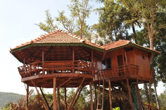 Tree House Picture Of Bird Of Paradise Homestay