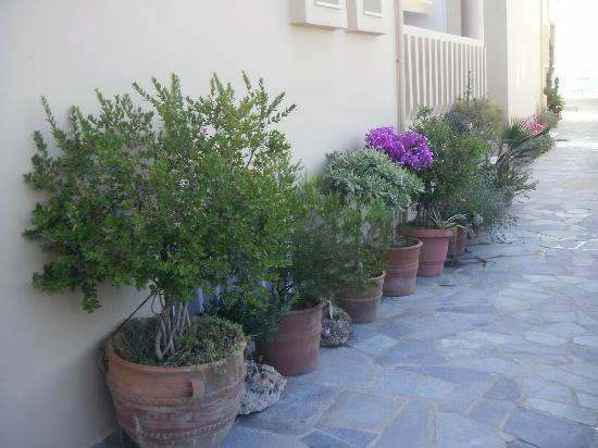 Ermis Suites: Flowers outside the hotel