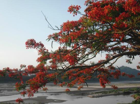 Mekong Estate: Vue de la propriété
