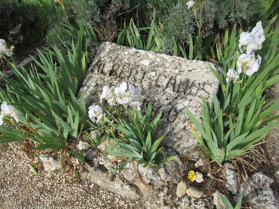 Albert Camus Grave
