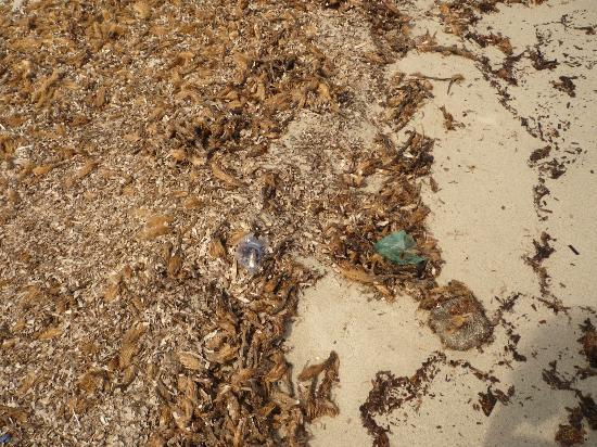 Castiadas, Itália: Ungepflegter, verschmutzter Strand!
