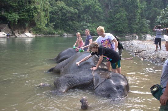 Expedition Jungle : Washing the elephants