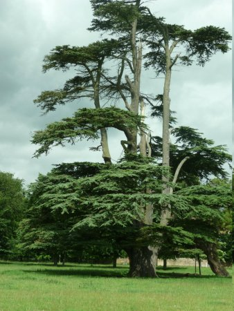 The Stables at Henham Park: the park