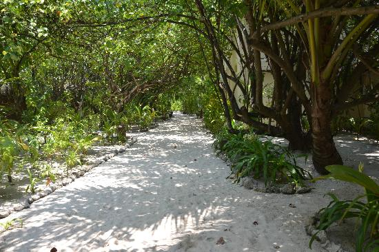 Mirihi Island Resort: pathway along the front of beach bungalows