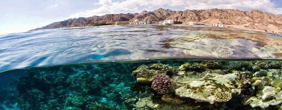 Canyon Estate Dahab Beach Hotel Residence: fronte resort direttamente sul reef