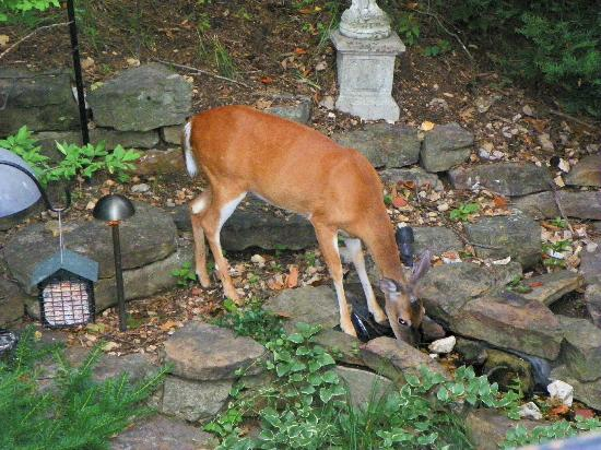 Arsenic and Old Lace Bed & Breakfast Inn: deer in garden area