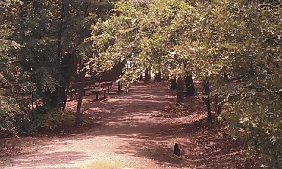 Chickasaw National Recreation Area: nice walking trails...