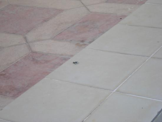 Hotel Minay: pool areea 