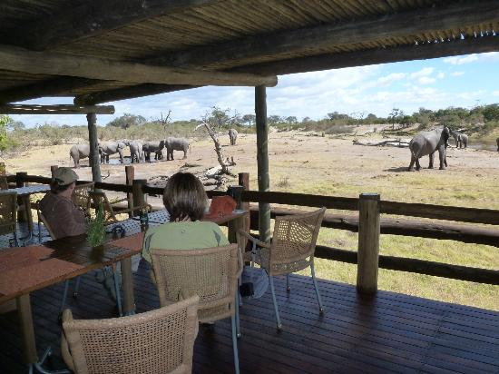 Savute Safari Lodge: Waterhole