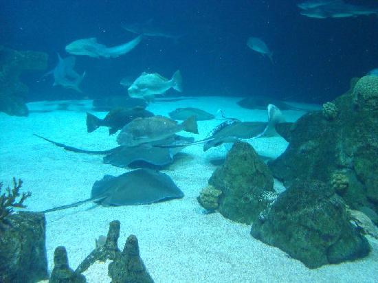 ... the Albuquerque Aquarium - Foto di ABQ BioPark Aquarium, Albuquerque
