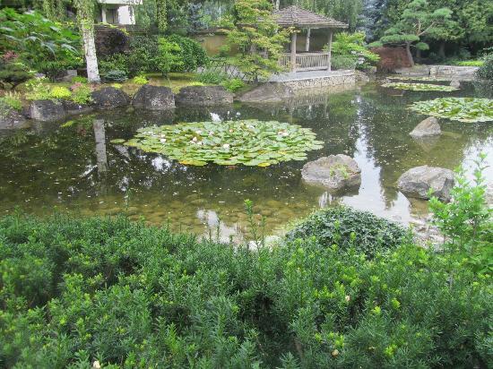 koi pond picture of kasugai japanese garden kelowna