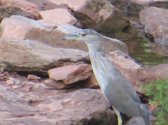 Martin Park Nature Center: Bird at creek