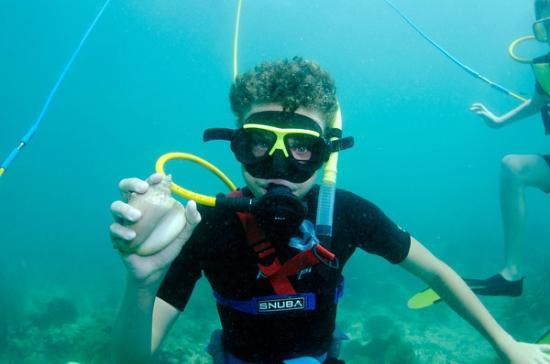 Dive Duck Key: Shell