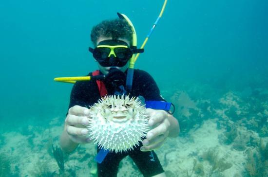 Dive Duck Key: Puffer fish!