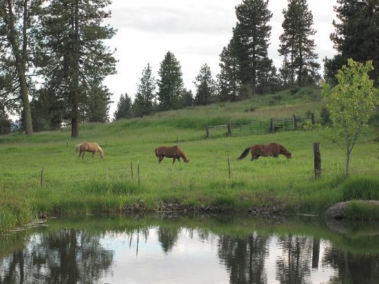 Seven Devils Lodge : horses