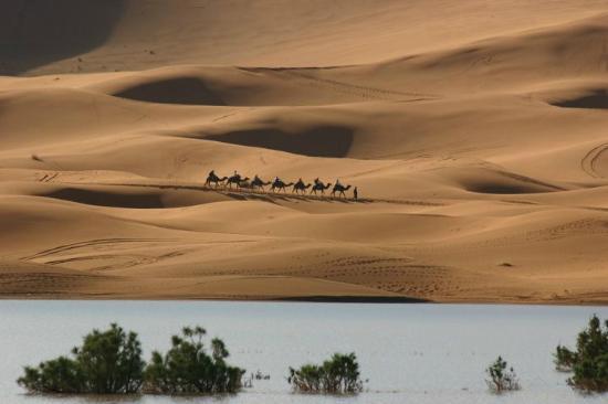 Tours Over Morocco Day Tours : caravan