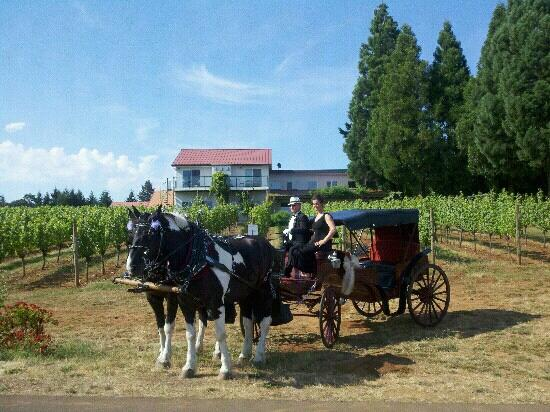 Horse drawn carriage by Equestrian Wine Tours, for a summer wedding at Wine Country Farm