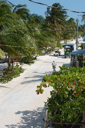 Caye Caulker Condos: View down tthe street from our room