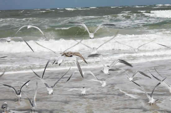 Saint Augustine's Original Shark Teeth Hunting Tours: The beach here is one of the most beautiful beaches in Florida