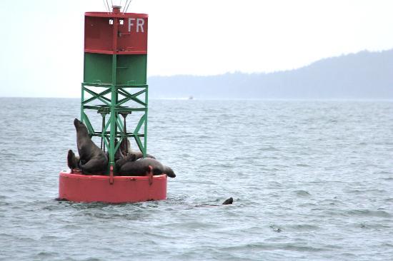 Weather Permitting Alaska - Whale Watching: Sea Lions (6-30-12)