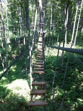 Treetop Trekking: Careful where you step! - Black course
