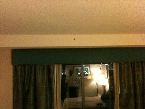 Hilton Garden Inn Atlanta Downtown: Roach above window...pic taken on the other side of the room