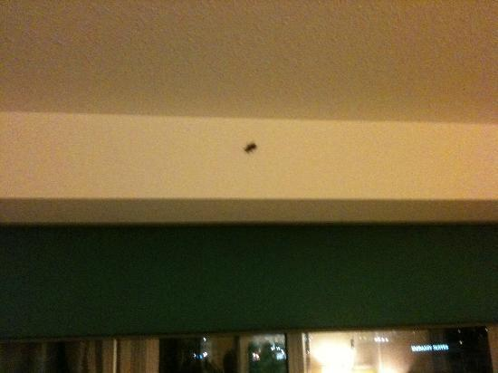 Hilton Garden Inn Atlanta Downtown: Another picture of the roach