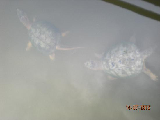Evergreen Brick Works: Turtles in the pond
