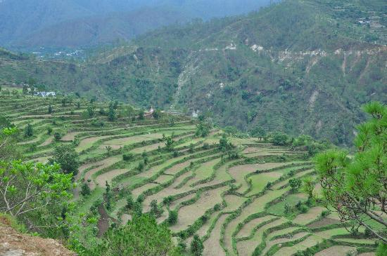 Junoon in the Hills: Terrace farming in the village