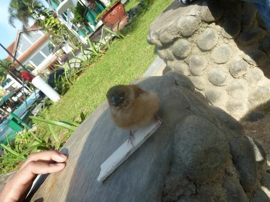 Lido Lakes Resort & Conference: We met the little bird lost from her mom