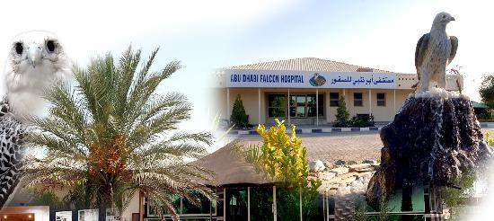 ‪Abu Dhabi Falcon Hospital‬