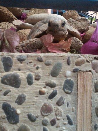 Riad Imourane : funny turtle :)