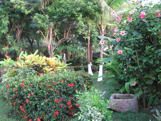 Casa del Mar Cozumel Hotel & Dive Resort: well maintained lush grounds