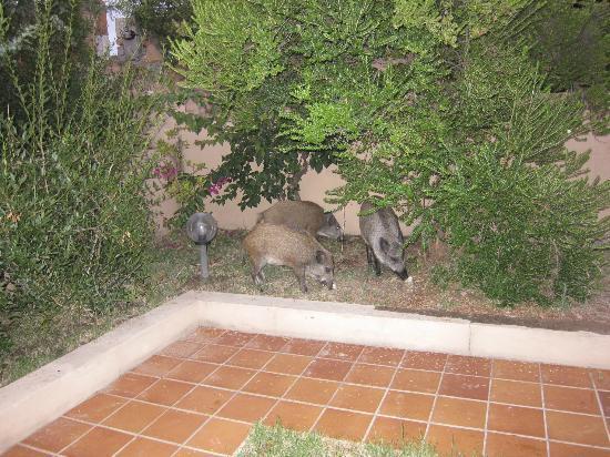 Residence Le Baiette: I vicini di appartamento