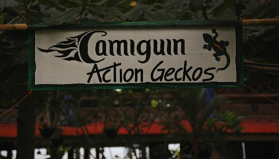 ‪‪Camiguin Action Geckos Dive & Adventure Resort‬: geckos