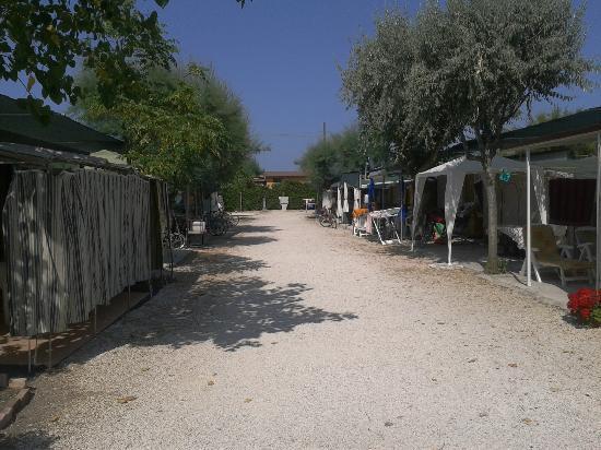 Camping La Medusa : Viale che porta alle casette