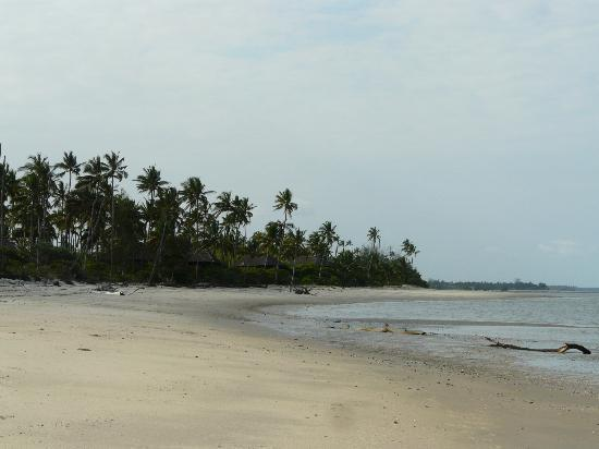Simply Saadani Camp: View along beach