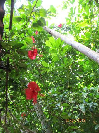 Sakal Bungalows: Garden